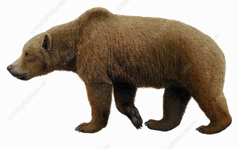 Prehistoric cave bear, artwork