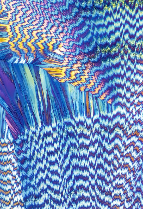 Vitamin B1 crystals, light micrograph