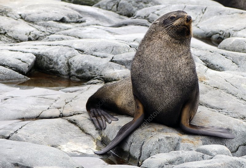 Sea lion resting on the shore