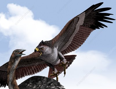 Haast's eagle, artwork