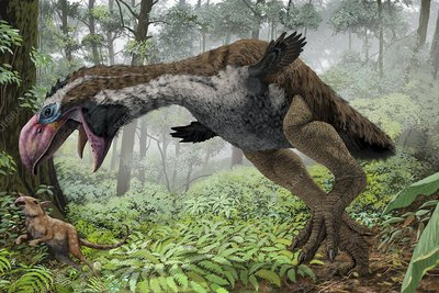 Gastornis hunting, artwork