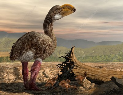 Dromornis with chicks, artwork