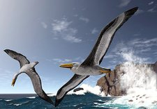 Giant extinct seabirds, artwork