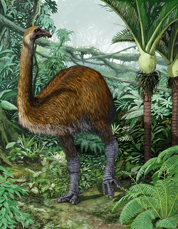 Giant moa, artwork