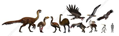 Extinct birds, artwork