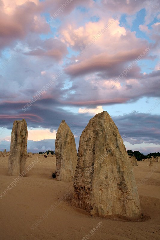 Limestone pinnacles at dusk, Australia