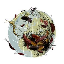 Global insect plague, conceptual artwork