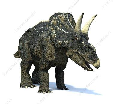 Nedoceratops dinosaur, artwork