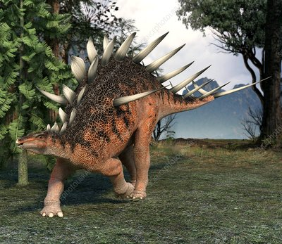 Kentrosaurus dinosaur, artwork
