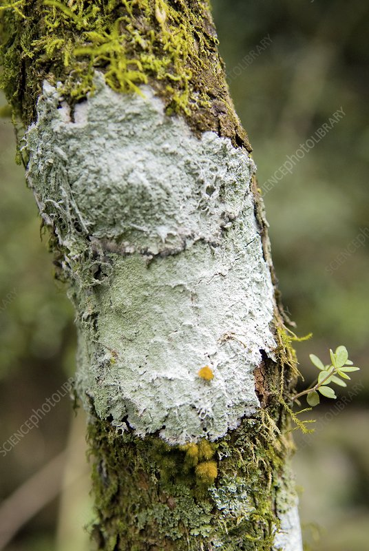 Lichen on a tree trunk
