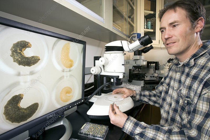 Bee disease research