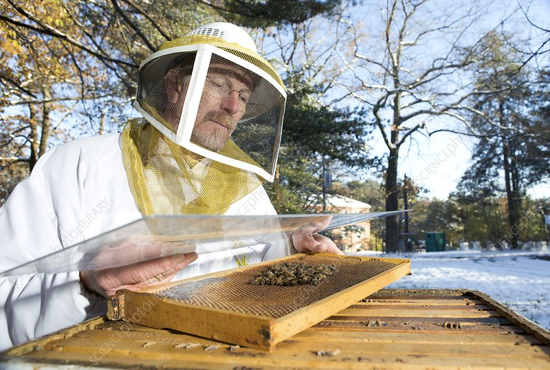 Honey bee health research