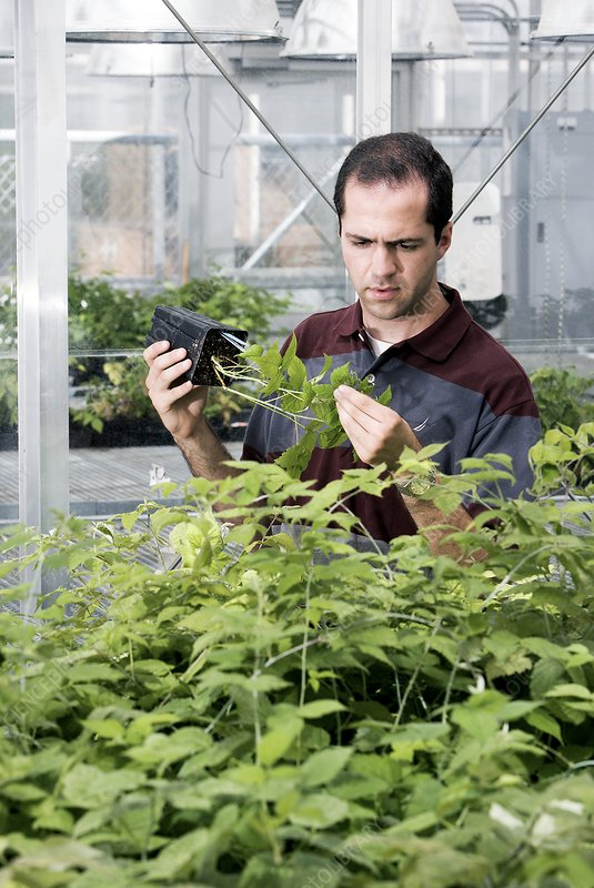 Plant pest research
