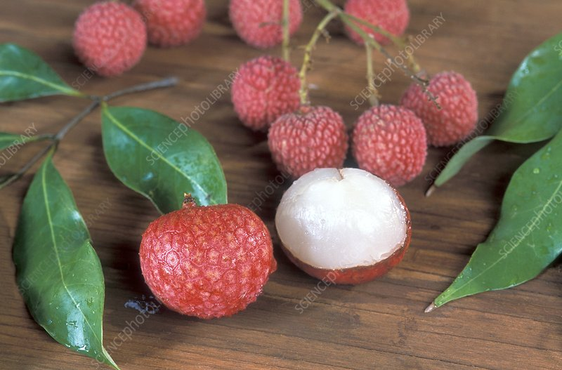 Lychee (Litchi chinensis) fruit