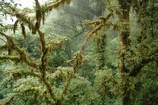 Tropical Cloud Forest