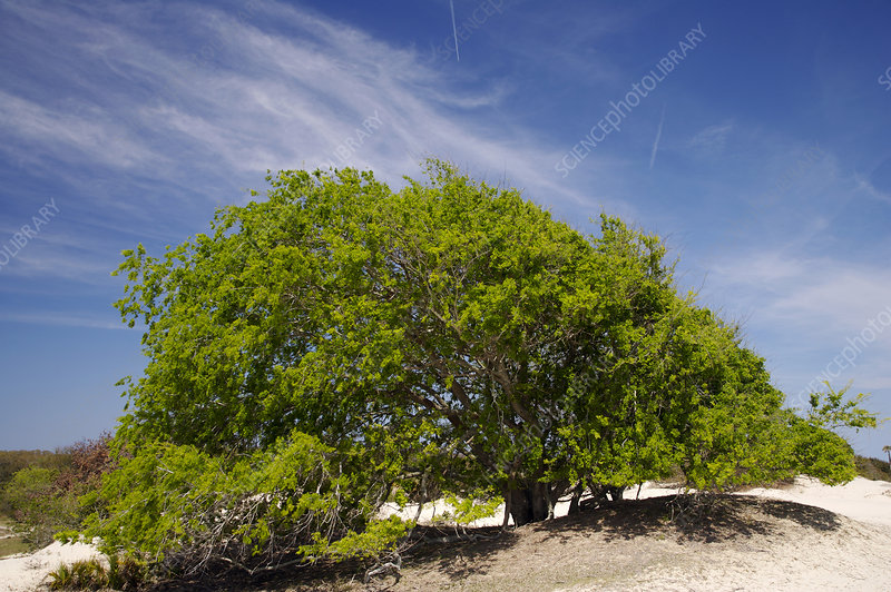 Tree on Dunes