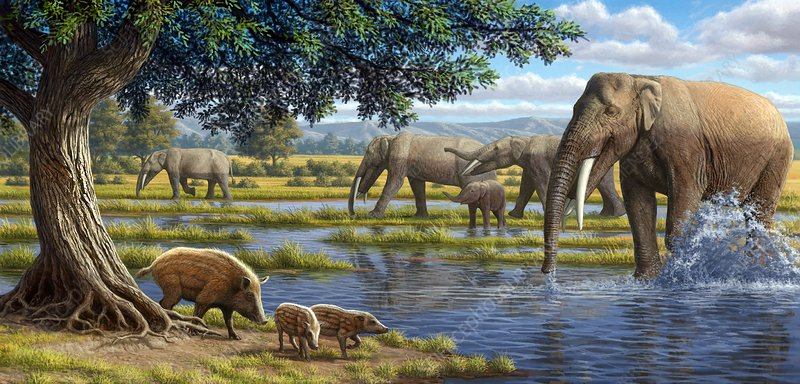 Mammals of the Miocene era, artwork
