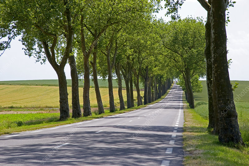 Tree-lined Highway in France