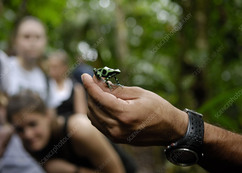 Man Holding Black Poison Frog