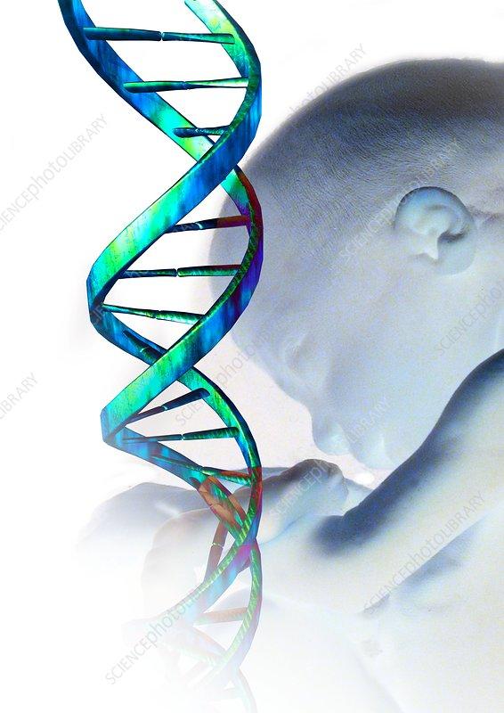 Human cloning, conceptual artwork
