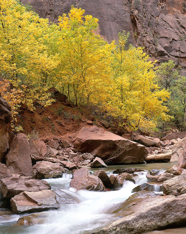 'Virgin River, Zion National Park'