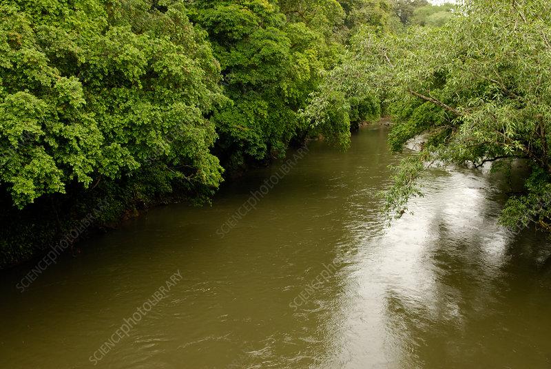 'Puerto Viejo River, Costa Rica'