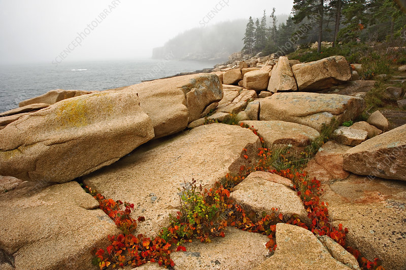 'Acadia National Park, Maine'