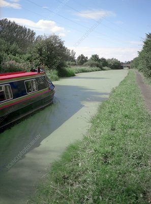 Polluted canal, Cheshire, UK