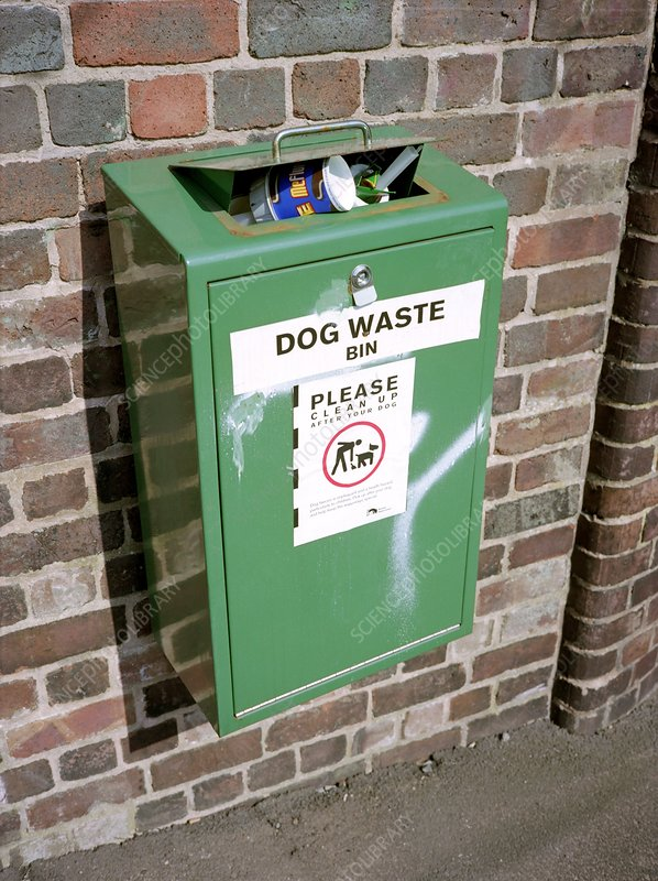 Overflowing dog waste bin
