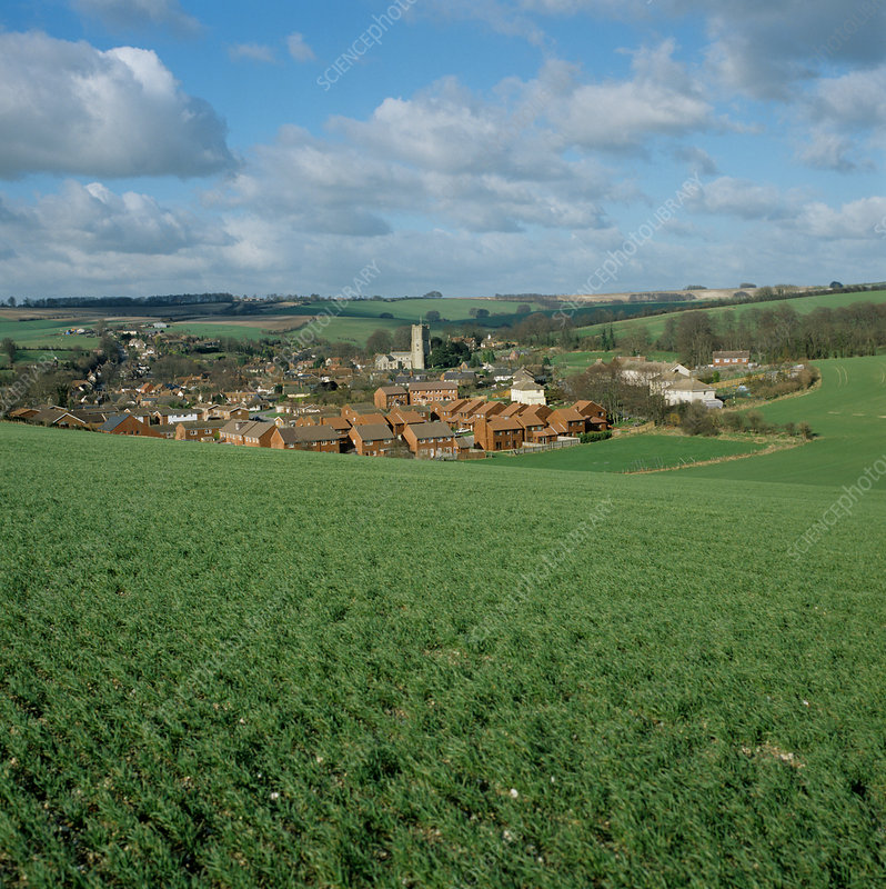 'Wheat crop and village, Wiltshire, UK'