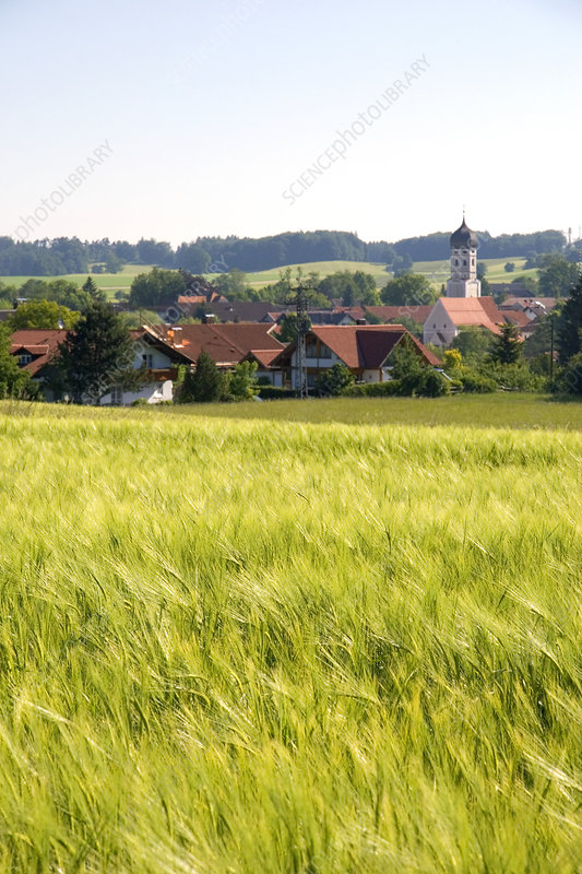 'Barley Field, Amersee, Germany'