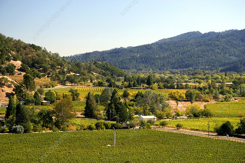 'Valley and Vineyards, Calistoga, California'