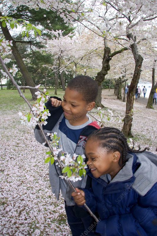 Children smelling cherry blossoms