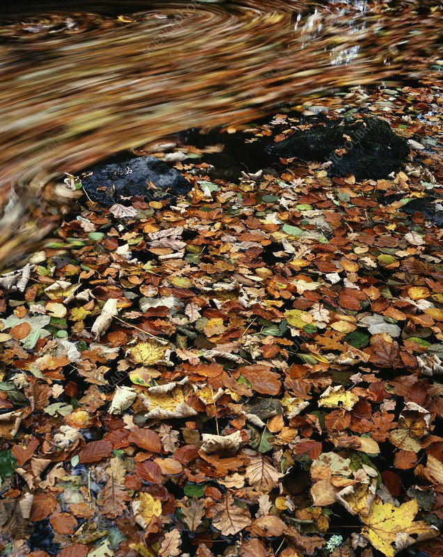 Leaves floating on river water