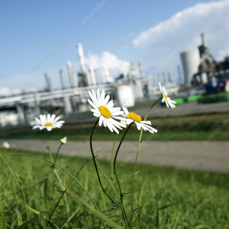 Flowers around an industrial plant