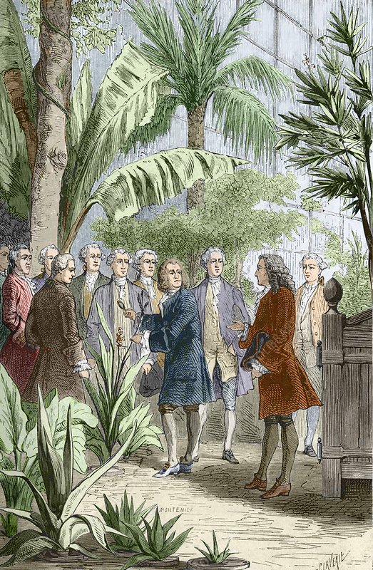 Linnaeus and de Jussieu, botanists
