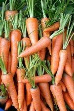 فیبر غذائی و درگیری نخاع