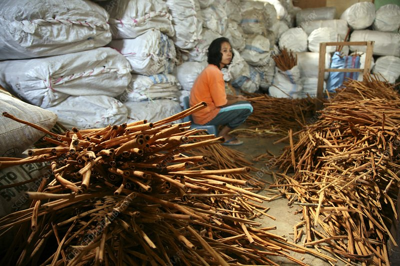 Girl sitting by stack of cinnamon sticks
