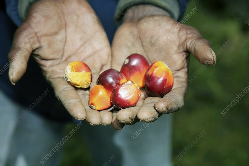 Small fruits in cupped hands