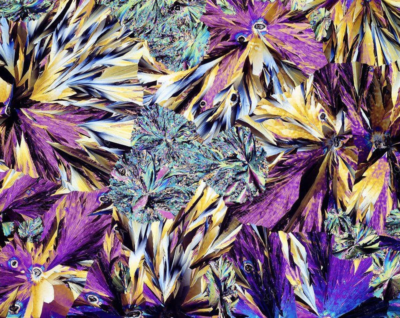 Paracetamol crystals, light micrograph