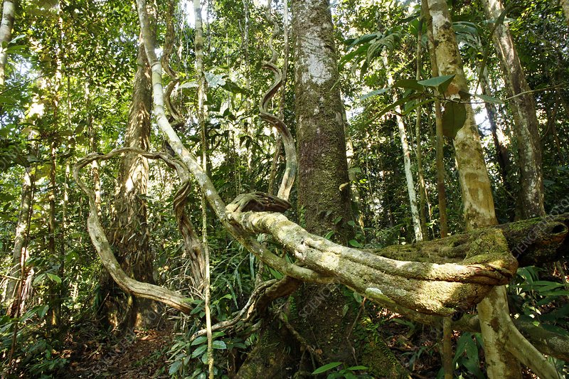 Rainforest undergrowth