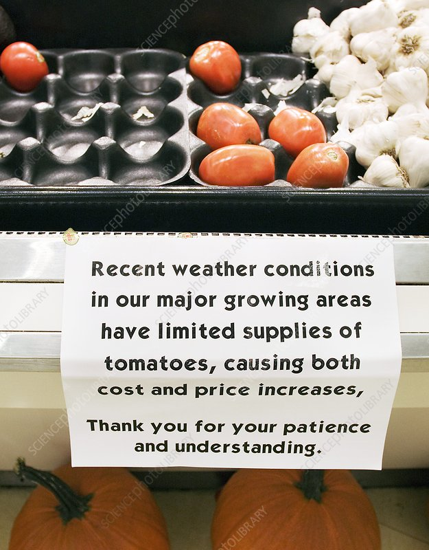 Effect of climate change on food prices