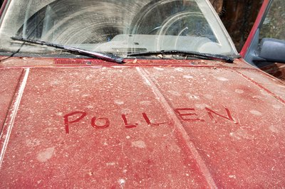 Layer of pollen on a car