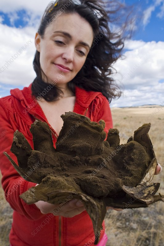 Woman holding split puffball fungus