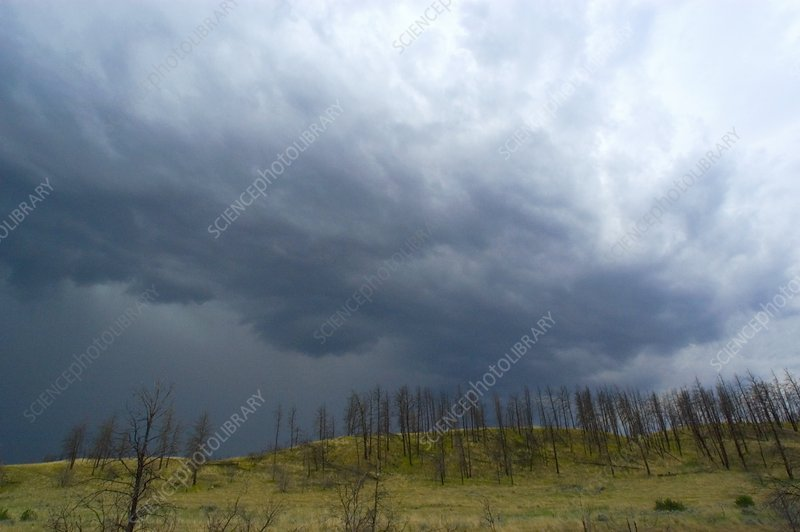 Stormy sky over burnt trees