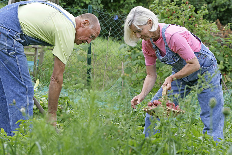 Elderly person gardening