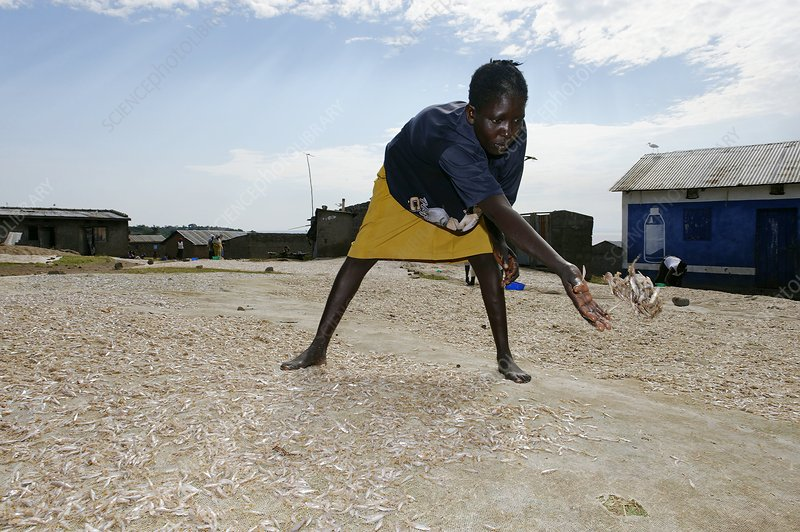 Woman sorting fish, Kenya