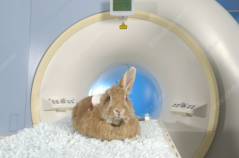 Rabbit on an MRI scanner