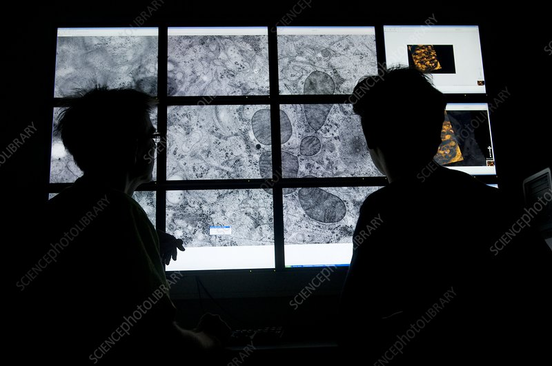 Cell mapping technology