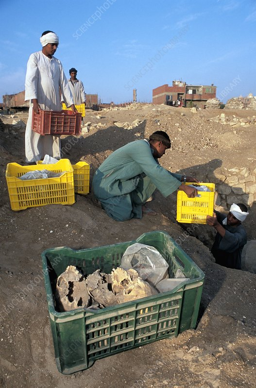 Excavating Islamic mummies, Egypt